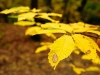 autunno_13